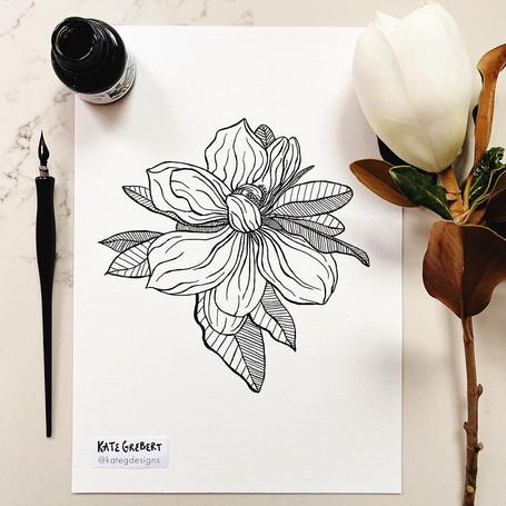 Magnolia-ink-drawing-Sydney-Illustrator-