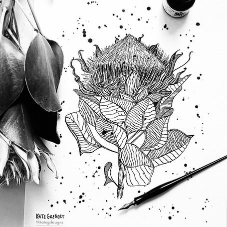 King-Protea-ink-drawing-Sydney-Illustrat