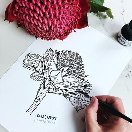 Waratah-ink-drawing-Sydney-Illustrator-K