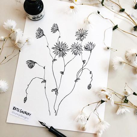 Native-Daisy-ink-drawing-Sydney-Illustra