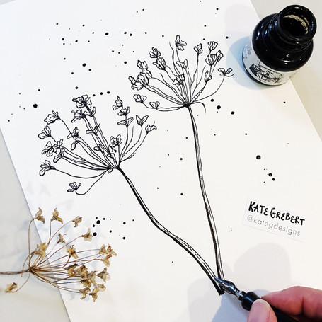 Allium-Botanical-Ink-Drawing-Sydney-Illu