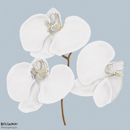 Orchid-editorial-illustration-Sydney-Ill