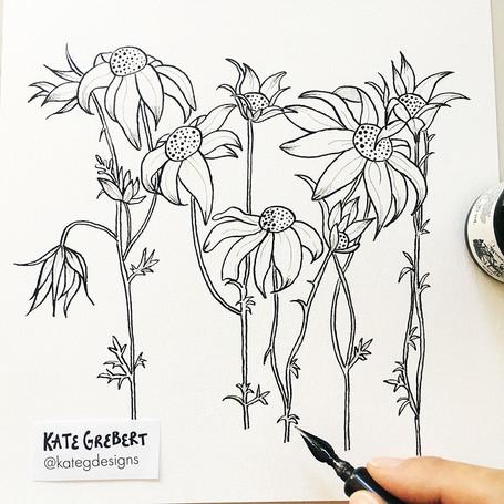 Flannel-Flower-ink-drawing-Sydney-Illust