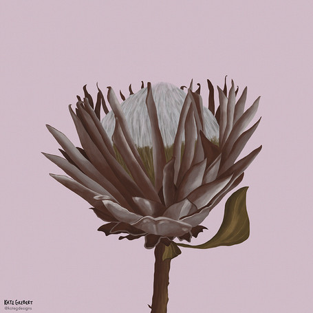 Protea-editorial-illustration-Sydney-Ill