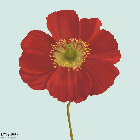 Poppy-editorial-illustration-Sydney-Illu