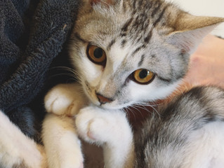 3歲小貓與高齡貓 腎病發現大不同