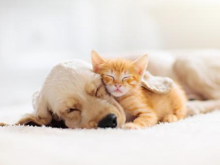 Could CBD Help Your Pet Sleep Better?