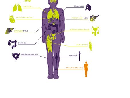 Understanding the Endocannabinoid Systems in Humans and Their Pets