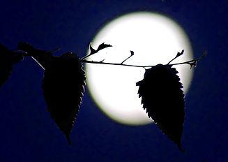 Moon and leaves lighter.JPG