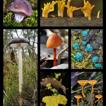 Fungus collage