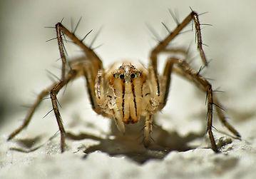 spider lynx 1.JPG