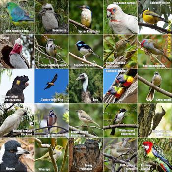 Bird species.