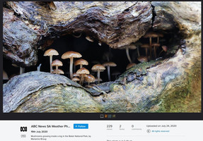 Mushrooms in a log