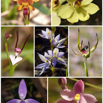 Orchid collage.