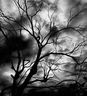 Tree dead.JPG