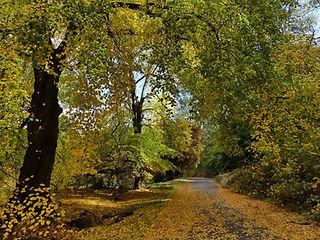 Autumn 1 small.JPG