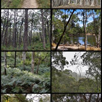 Landscape diversity