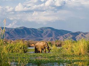 ZAMBIA V2.jpg