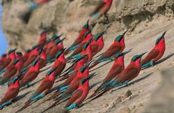 Birdlife at Bush Company