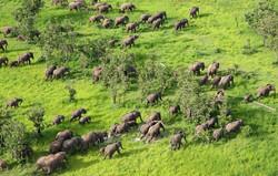 Elephants at Bush Company