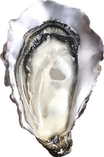 216-2166323_oyster-png-transparent-png_e