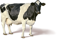 15-cow-png-image_edited.png