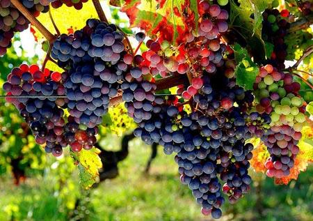 jus-raisin-bio-antioxydant-puissant-natu