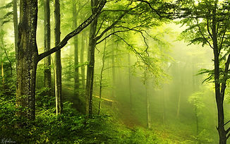 7040269-forest-enchanted.jpg