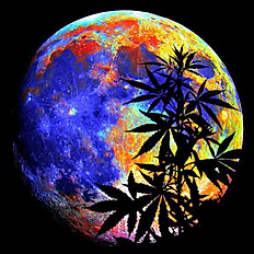 Sticker E - Exotic marijuana