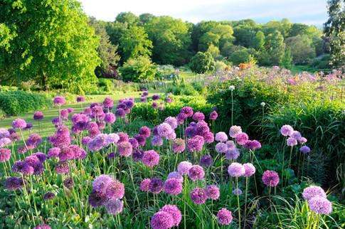 Harlow Carr Gardens, Harrogate by Sirastudio. Photographers in Harrogate.
