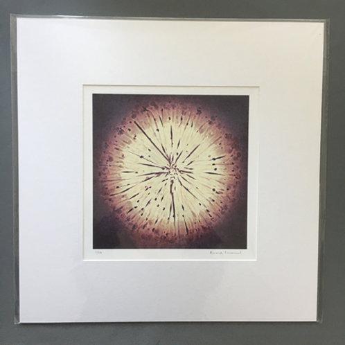 Iris Sun (Medium)