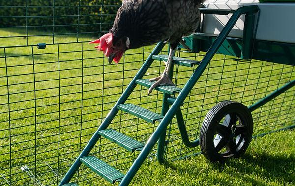 ladder-eglu-go-up.jpg