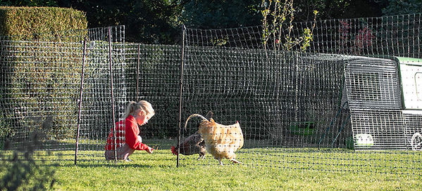 Omlet Chicken Fencing.jpg