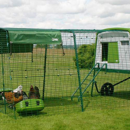Omlet Eglu Chicken coops now available!