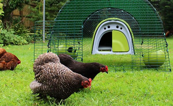 Eglu_classic_green_chicken_coop_fox proo