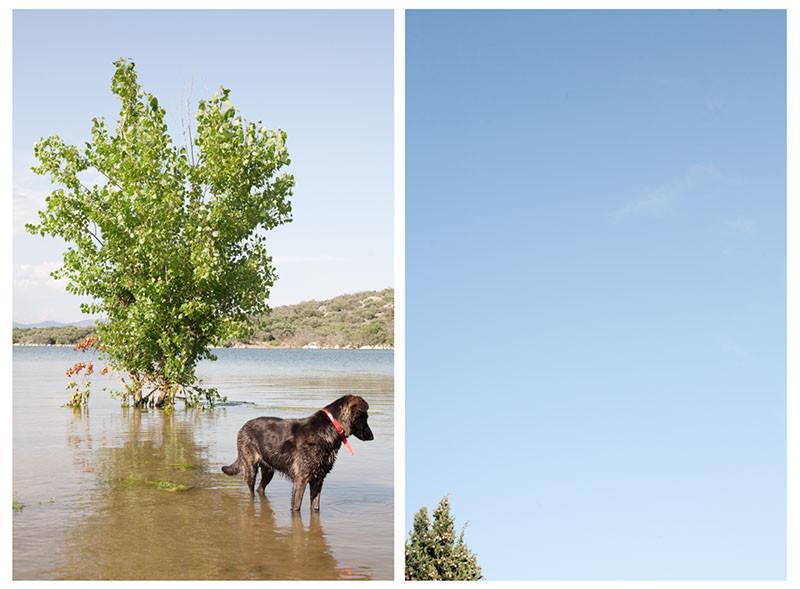 собака и верх сосны.jpg