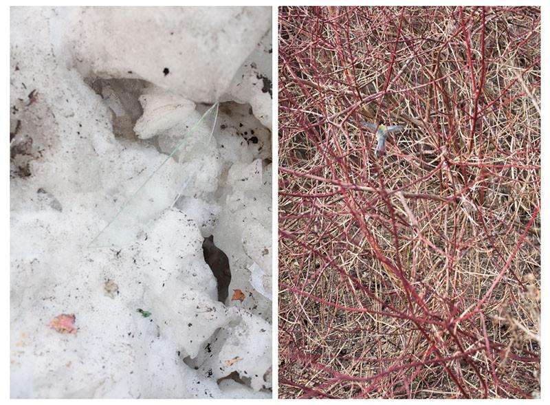 стекло в снегу и птица в ветвях.jpg