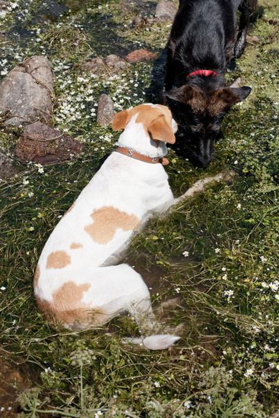 собаки-в-воде.jpg