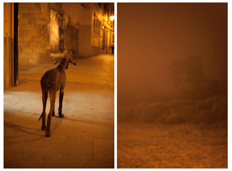 собака и португалия.jpg