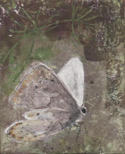 Papillon d'hiver