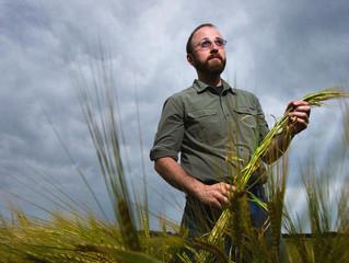 Barley growers make malt for Minnesota brewers