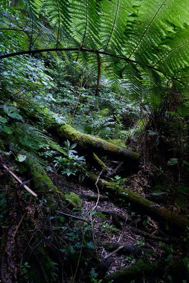 Ratapihipihi, Taranaki, New Zealand