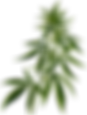 cannabis-vector-clipart.png
