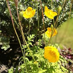 Summer sun☀💚🌱🌲🌻_#garden #home #sun #summer #countryside #countrylife #countrygirl #Worcestershir
