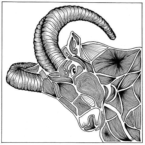 12x12 Ram Print