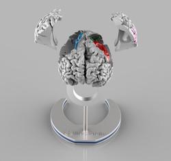 3D-Visualisierung Gehirn