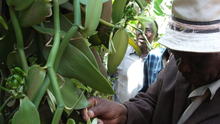 Creating Entrepreneurial Opportunities for Vanilla Farmers in Tanzania