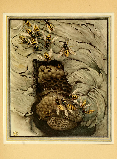Fabre books of insects - 1921.png