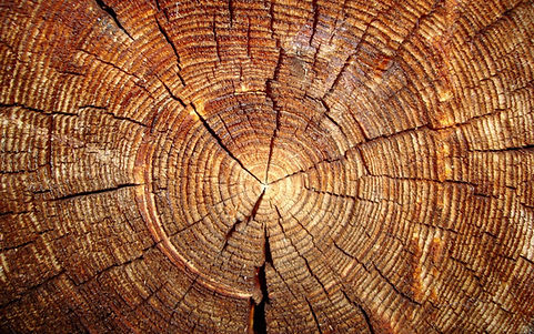 Legno l'agora del legno