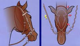 Diagram showing how the cross-under straps work on a bitless bridle
